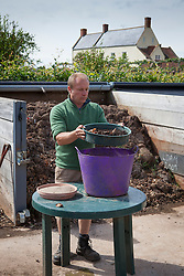 James sieving leaf mould at Holt Farm organic garden before adding sand to make compost