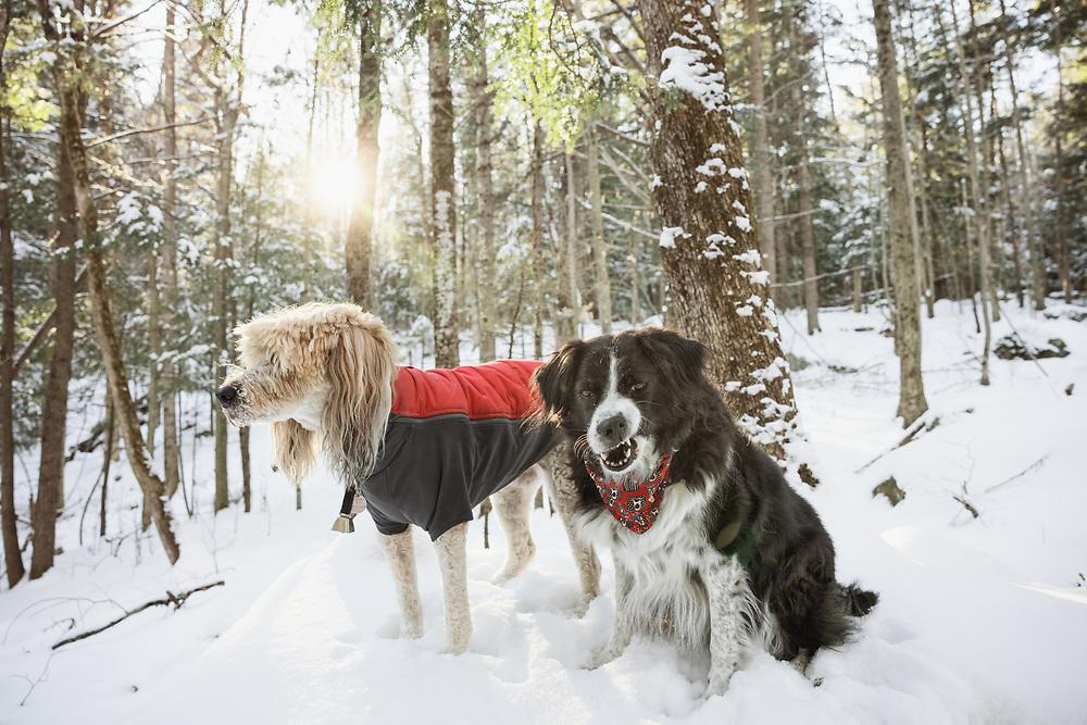 two dogs in a snowy landscape