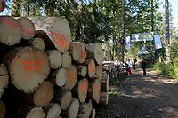 """31.08.2017 Puszcza Bialowieska Kilkunastu aktywistow organizacji ekologicznych od wtorkowego poranka probuje uniemozliwic wywozenie drewna z Puszczy Bialowieskiej . Kolejna noc spedzili na przypietych do drzew platformach . W protescie biora udzial takze aktywisci z 12 krajow N/z przygotowane do wywozki drewno z grafitti """" To drewno jest nielegalne """" fot Michal Kosc / AGENCJA WSCHOD"""
