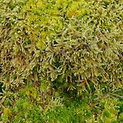 Moss landscape, Pantglas Mawr, Ceredigion.