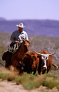 30 APRIL 2000 -KINGMAN, ARIZONA: J.W. Gross drives cattle to a new pasture on the Gross Ranch, northwest of Kingman, Arizona, April 30. Gross had found the calf laying under a cactus, separated from its mother, and carried it to the corral because it was too young to walk their on its own. Ranchers in Arizona are enduring their second year of drought. Mike Gross, owner of the Gross Ranch, said the ranch received only a third of normal rain during the winter and that in 1999 the ranch got a total of three inches of rain, compared to up to 12 inches of rain in a normal year. Gross, whose family has been ranching in Kingman since 1872, said he has had to reduce his herd by about 1/3 because the pastures are so dry. He added that he is using feed supplementals so his cattle can better digest and get more protein from the dry forage in the pastures. Other ranchers in the area are in similar straits and some are being forced to sell their entire herd.     PHOTO BY JACK KURTZ