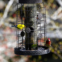 North America, Canada, Nova Scotia, Eastern Shore. Birdfeeder at Liscombe Lodge in Liscombe Mills.