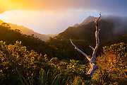 View at sunset of the Na Pali Coast's dramatically eroded Kalalau Valley from the Pihea Trail, Kokee State Park, Kauai, Hawaii.