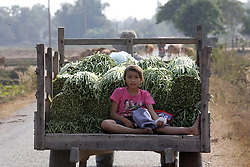 unnamed man and daughter drive their crop of long beans to market.<br />Ekxang Village, Phonhong District, Vientiane Province