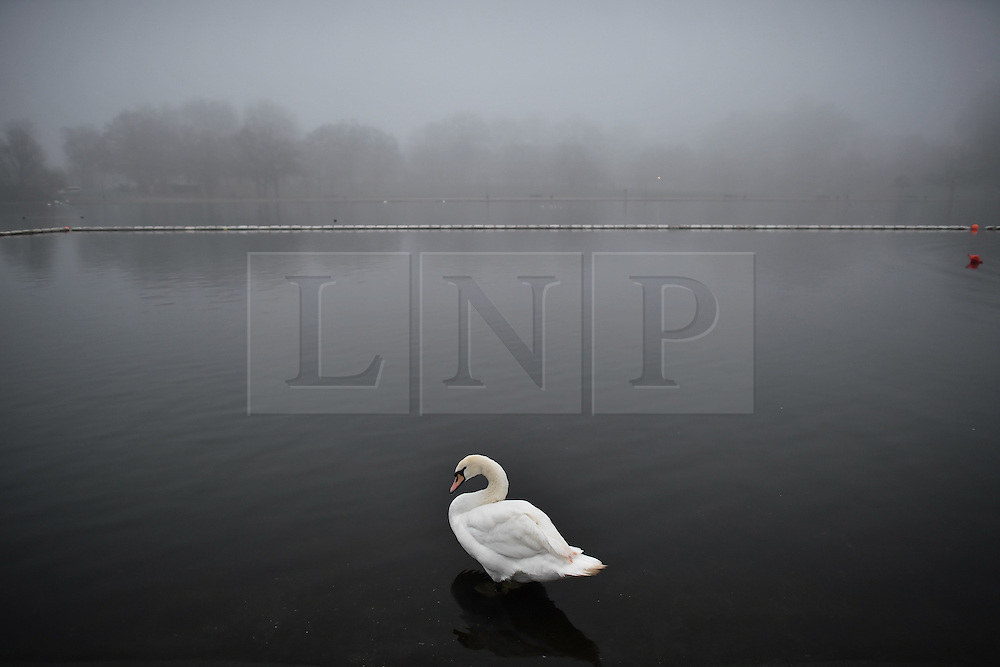 © Licensed to London News Pictures. 30/12/2016. London, UK.   A swan sits on the serpentine, surrounded by fog in Hyde Park central London at sunrise on another freezing winter morning.. Photo credit: Ben Cawthra/LNP