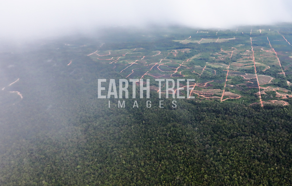Clear cutting tropical forest to mkae way for palm oil, Papau Province, Indonesia, 20th January 2020. Illegal forest clearing, making way for palm oil expansion. Papua, Indonesia