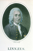 Linnaeus (Carl von Linne - 1707-1778). Swedish naturalist and physician. Scientific nomenclature of plants and animals. From an early 19th century hand coloured engraving