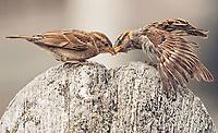 Vögel in der Natur