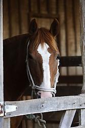 Cavalo Crioulo no 12 Rodeio Internacional do Mercosul, um dos maiores eventos do gênero. FOTO: Jefferson Bernardes/Preview.com
