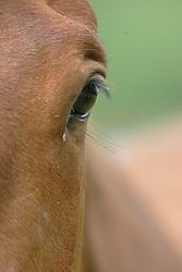 Eye<br /> © Hippo Foto - Dirk Caremans