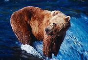 Brown Bear fishing for salmon, Brooks Falls,  Brooks River, Katmai National Park, Alaska.