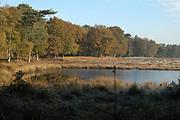 Winter in Nederland / Winter in Holland<br /> <br /> Pluizermeer Winter in Nederland / Winter in Holland Paardenbos  achter Paleis Soestdijk