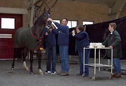 Sloet van Oldruitenborgh-Oosterbaan M.<br />KWPN hengstenkeuring 2003<br />Photo © Dirk Caremans