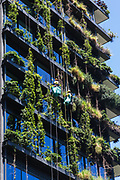 General Views showing One Central Park which is built around Chippendale Green, Sydney. The building itself was designed by award-winning Parisian architect Jean Nouvel and the vertical gardens designed by the artist and botanist Patrick Blanc, Chippendale, Sydney, Australia. The residential building has been named best tall building in the world in June 2014. A massive silver heliostat hangs from One Central Park to redirect light to the ground below. The unique steel heliostat is specifically designed to reflect sunlight to another area. Research shows green infrastructure such as garden walls can play a big role in cooling the city.Two landscape gardeners seen maintaining this unique vertical garden wall.
