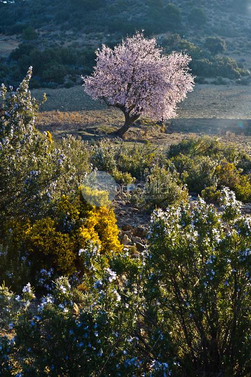 Almendros en flor. Finca Los Pandos. Almansa. Albacete ©Antonio Real Hurtado / PILAR REVILLA