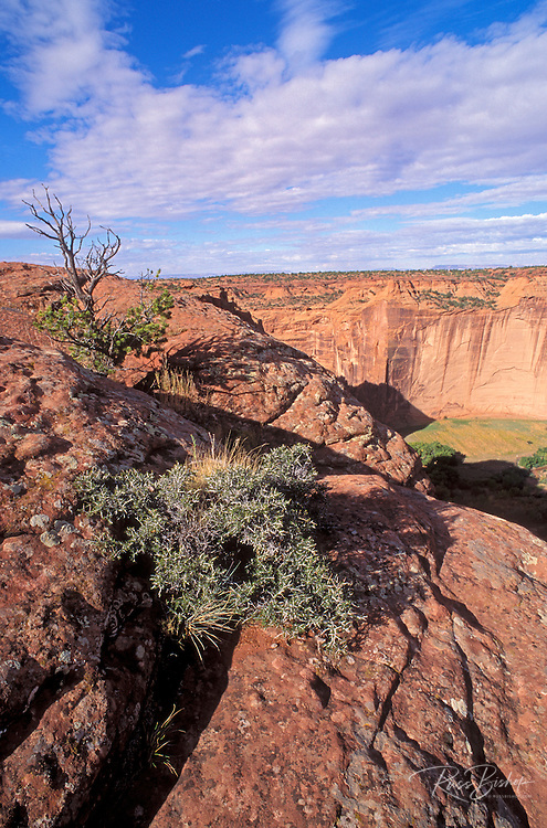 Morning light on Canyon de Chelly from Sliding House Overlook, Canyon de Chelly National Monument, Arizona.