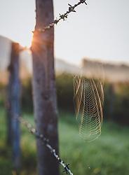 THEMENBILD - ein Spinnennetz an einem Zaun bei Sonnenaufgang, aufgenommen am 05. August 2018, Kaprun, Österreich // a spider web on a fence at sunrise on 2018/08/05, Kaprun, Austria. EXPA Pictures © 2018, PhotoCredit: EXPA/ Stefanie Oberhauser