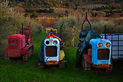Old tractors ready for use in smallholding, in Lagrasse, France. The style of the tractors has a thin base, designed to move between rows of plants.