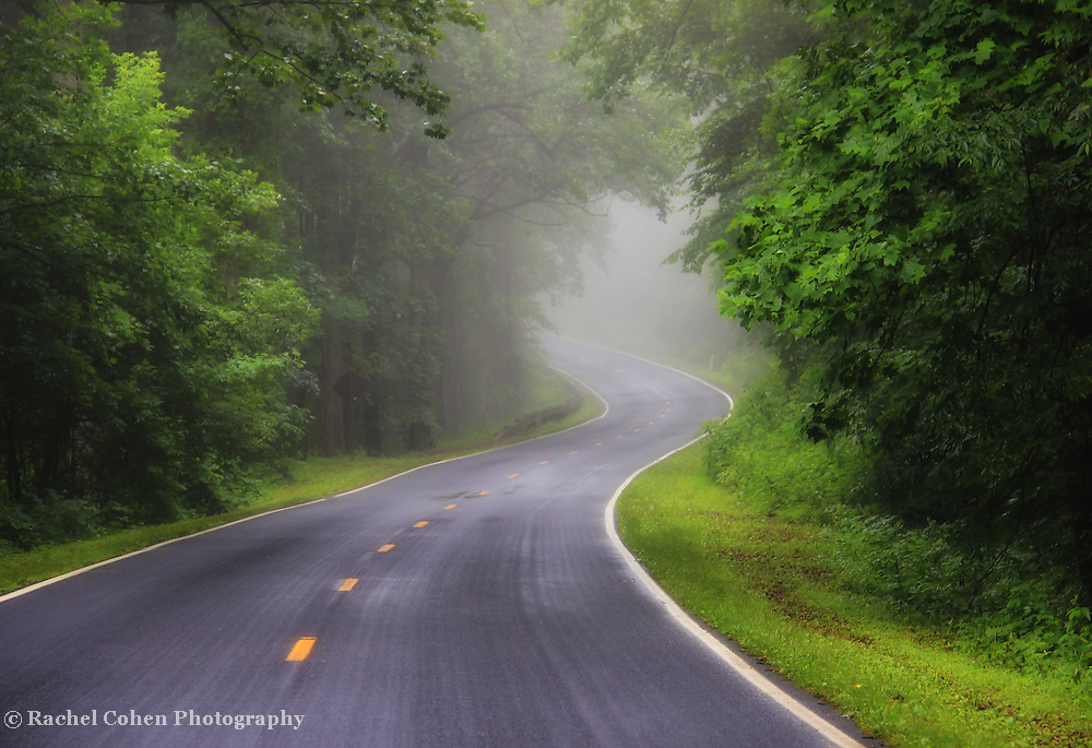"""""""Fog on the Parkway""""2<br /> <br /> Beautiful thick fog on a summer morning on the Blue Ridge Parkway!"""