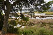Coastal wetlands on the island of Kefalonia, Greece