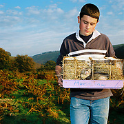 Exmoor hill farmers son, Richard Hawkins holds a cage of ferrets at Warren Farm, Exmoor, Somerset, UK. Warren Farm is known as the most isolated farm on Exmoor.