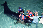 veterinarian Dr. Greg Bossart and staff insert tube to feed baby sperm whale, Physeter macrocephalus, brought for rehabilitation after stranding, Miami Seaquarium, Florida, Miami, Florida, USA