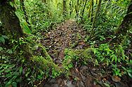 Cloud Forest, Manacupuwa Reserve, Ecuador