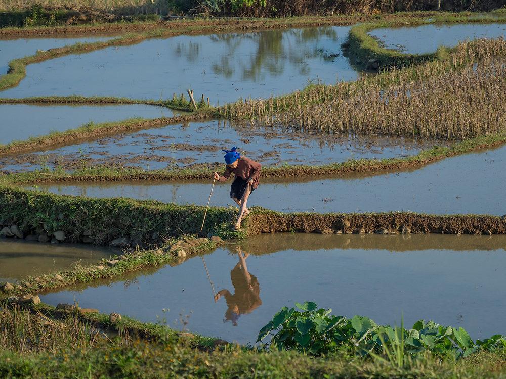Asia, Vietnam, Pu Luong Nature Reserve,  woman crossing terraced rice paddies