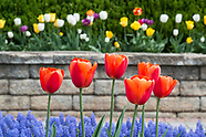 Spring flowers at the Orange County Arboretum