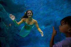 August 14, 2017 - Sao Paulo, Brazil - Visitors watch several mermaids while they swim in a giant tank during a show at an aquarium in Sao Paulo, Brazil. (Credit Image: © Cris Faga via ZUMA Wire)
