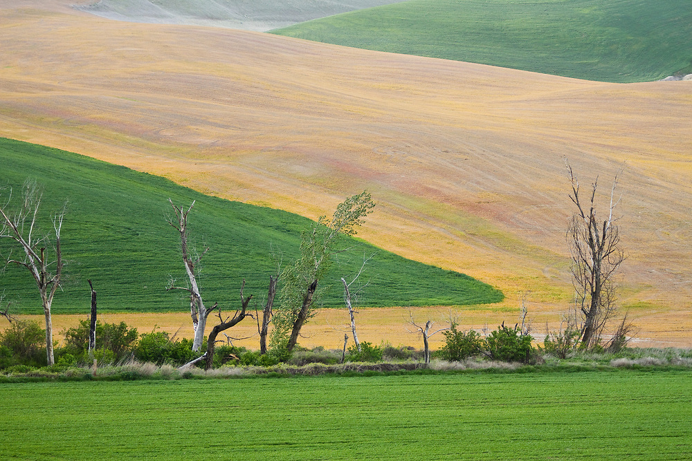 Limited Editions of 17<br /> Crop rotation layers and trees on the Palouse of Washington State close to the Snake River's Washington section