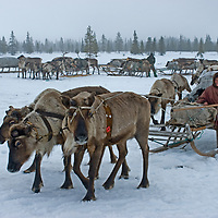 North of the Arctic Circle in Russia, 77-year old Marie Terentéva, a matriarch of the last nomadic Komi reindeer herding clan, prepares to drive a train of sleds across the tundra.