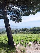A vineyard at Cadière d'Azur near Bandol, France