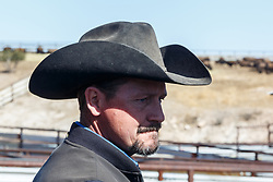 Ranch manager, Ladder Ranch, west of Truth or Consequences, New Mexico, USA.