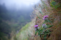 Vistors and sites at Devils Churn state park near Yachats, Oregon.  Thistle flowers damp from the fog, grow on a hillside.