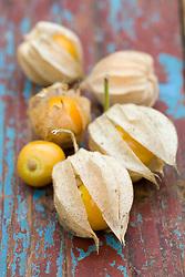 Cape Gooseberries - Physalis peruviana
