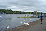 Glasgow, Scotland, Friday, 4th  August 2018, Local Swans, mixing with the crews boating at,The European Games, Rowing, Strathclyde Park, North Lanarkshire, © Peter SPURRIER/Alamy Live News