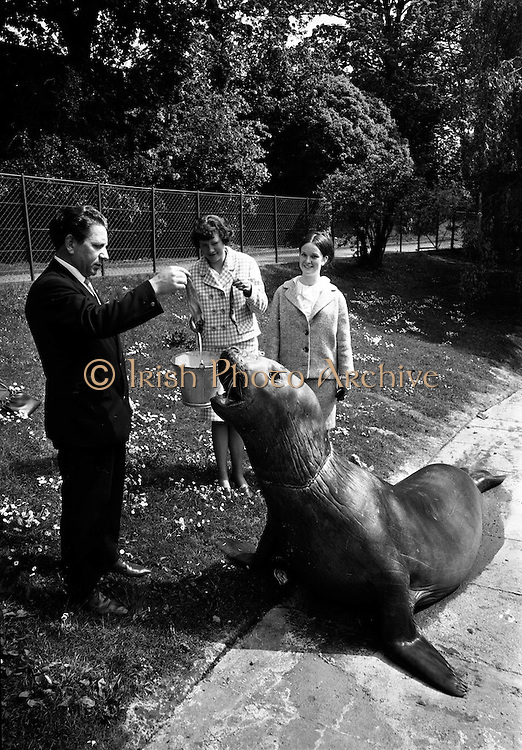 """14/05/1965<br /> 05/14/1965<br /> 14 May 1965<br /> National Seafood Cook 1965, visits the Zoo. Miss Mary Kenny of Donaghmore, Dundalk, the BIM """"National Seafood Cook 1965"""", visited the Zoological Gardens, Dublin and fed the best fish eater in Ireland- an elephant seal which recently arrived from the Falkland Islands. Also in the picture, on right, is Miss Catherine Carroll, Bord Iascaigh Mhara."""