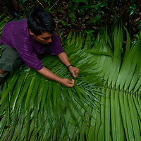 Wilder, a Yanayacu Indian, cuts palm leaves to weave together for a rain shelter in Peru's Amazon Jungle.