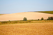 Golden yellow summer colours of fields of harvested arable crops on Waden Hill, Avebury, Wiltshire, England