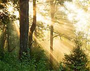 """Sun beams illuminating the forest below. <br /> <br /> 14"""" x 11""""<br /> See Pricing page for details. <br /> <br /> This looks fantastic as a canvas wrap  in a large size.<br /> <br /> Please contact me for custom sizes and print options including canvas wraps, metal prints, assorted paper options, etc. <br /> <br /> I enjoy working with buyers to help them with all their home and commercial wall art needs."""