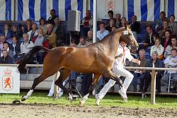 328-Ucelite<br /> KWPN Paardendagen Ermelo 2004<br /> Photo © Hippo Foto