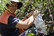 Rosa Maria Roman-Cuesta collects an orchid specimen for Cusco herbarium