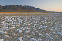Cracked mud and mineral desposits on dry lakebed, Steens Mountain in the distance,  Alvord Desert Oregon