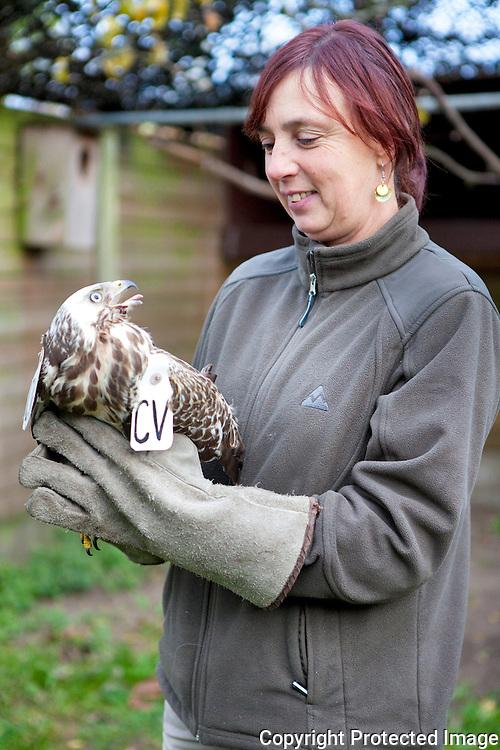 370504-Mieke De Wit van het VOC Vogelopvangcentrum Herenthout-Boeyendaal 74 Herenthout