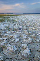Cracked mud and mineral desposits on dry lakebed, Alvord Desert Oregon