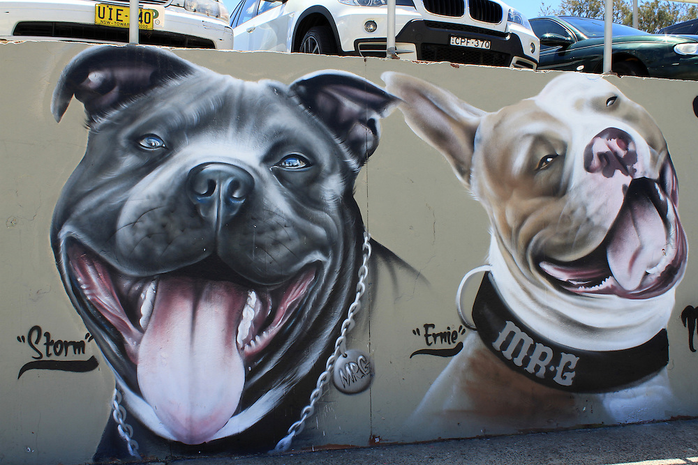 Murals on Bondi Beach, Sydney, show rescued staffys who need homes. Staffys have a much better reputation in Australia than in the UK