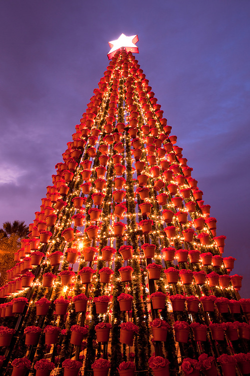 Christmas tree with lights in the Plaza of Arequipa, Peru
