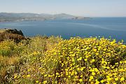 Coastline with wild flowers, Lesvos, Greece, northeastern Aegean Sea , lesbos