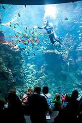 San Francisco: Steinhart Aquarium at California Academy of Sciences.  Photo copyright Lee Foster. Photo # casanf104400
